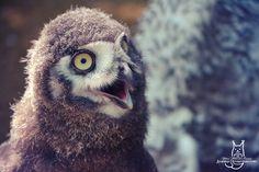 So cooool by Allerlei on DeviantArt Lab, Deviantart, Bird, Animals, Animales, Animaux, Birds, Labs, Animal