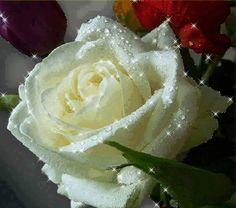 flores encontrradas en la web