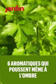 Permaculture, Hacks Diy, Parsley, Garden Plants, Life Hacks, Planters, Canning, Plantation Homes, Nature