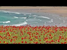 Skylark Birds Singing Over The Poppy Fields of Cornwall - Bird Song Relaxation Video and Sounds - YouTube