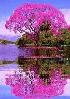 """""""Beautiful tree in Brazil🌳… """" Beautiful World, Beautiful Gardens, Beautiful Images, Beautiful Nature Wallpaper, Beautiful Landscapes, Beautiful Scenery, Beautiful Nature Photography, Beautiful Paintings Of Nature, Beautiful Landscape Pictures"""