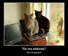 pl – Kot to nie zwierzę, to stan umysłu… Scary Funny, Hilarious, Polish Memes, Dad Jokes, Beautiful Cats, Cats And Kittens, Cat Lovers, Funny Memes, Lol