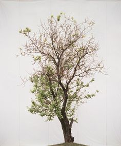 Tree #15 | Myoung Ho Lee