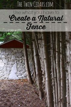 How to Create a Natural Fence Line :: The Twin Cedars