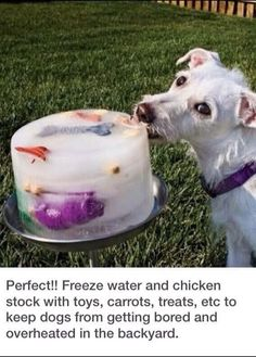 For dog owners - #Dog, #Dogs, #Pet, #Pets