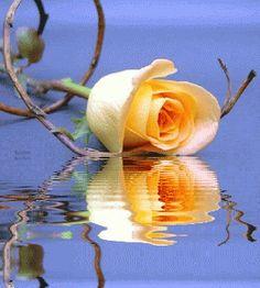 Animations, Animated Gifs, Reflection,  Beautiful Flowers, Animation, Animated Flowers, Flores, Flowers, Reflection, Keefers Photo:  This Photo was uploa...