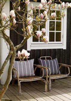 ❥bamboo chairs, grey/white stripe cushions, magnolia tree, beautiful.