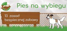 https://psipark.pl/bezpieczna-zabawa/32-najczestsze-bledy-na-wybiegu-dla-psow/