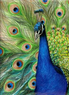 amazing colored pencil art | peacock by ~zerotwospirited on deviantART