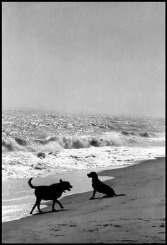 """Результат пошуку зображень за запитом """"Elliott Erwitt – Two Dogs With Owner"""""""