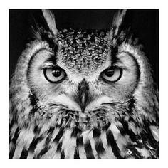 Owl.  Every time I see an owl of some sort it reminds me of Charlotte and her love for them.