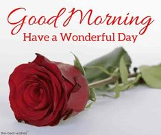 Top Good Morning Wishes With Rose – [ Best HD Images ] Good morning with beautiful rose. Good Morning Beautiful Gif, Good Morning Roses, Good Morning Msg, Good Morning Quotes For Him, Good Morning Picture, Good Morning Messages, Good Morning Greetings, Morning Pictures, Morning Gif