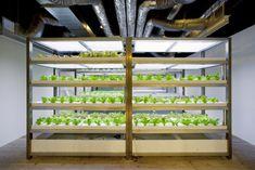 El arquitecto japonés Yoshimi Kono crea un huerto urbano en Tokio para un edificio de oficinas