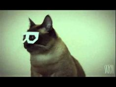 A Cat which can Dubstep