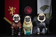 """A Couple Have Recreated """"Game Of Thrones"""" With Their Pugs And It's Magnificent"""