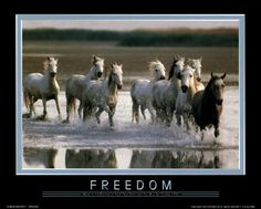 Image detail for -Motivational / Inspirational Posters - Freedom-Move to the Rhythm...
