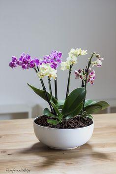 Como hacer un precioso centro de orquídeas para decorar tu casa por poco dinero