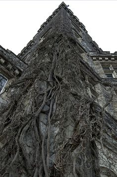 Climbing Roots on house