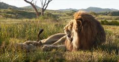 Lion King Timon, Lion King Movie, The Mighty Jungle, Lion Africa, Young Simba, The Lion Sleeps Tonight, Le Roi Lion, Baboon, Dark Fantasy Art