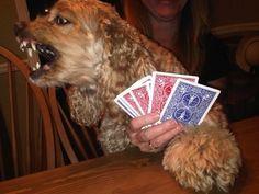If dogs played bridge ....