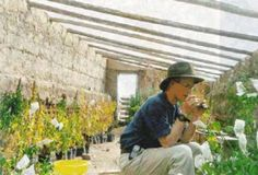 365 Aquaponics: An Underground Greenhouse or Walipini