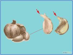 Grow Garlic Indoors in a Pot Step 5.jpg