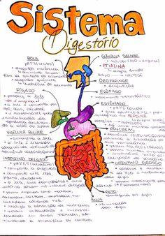 Resultado de imagem para resumo sistema digestorio