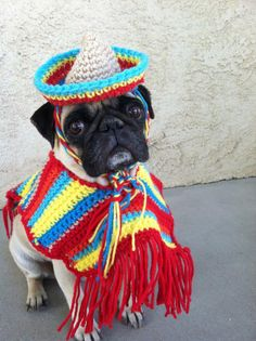 Poncho& Sombrero set for dogs-Costumes-Poncho for Dogs-Cinco De Mayo-Pugs-Novelty Hats-Hats for Pugs-Pugs from PugsNGiggles on Etsy. Saved to Things for. Pug Love, I Love Dogs, Chien Halloween, Cute Couple Halloween Costumes, Halloween Clothes, Novelty Hats, Pet Dogs, Pets, Pet Pet