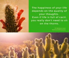 Barbara Louw, is a Traumatologist and Minister from South Africa. You Really, Cacti, Trauma, Helping People, Leadership, Workshop, Happiness, Wellness, Training