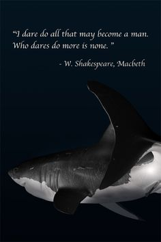 from Macbeth. these days sharks need protection from us more than we need to protect ourselves from them.