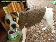 My Favorite Yarn and Crochet Hook Used For This Project MACHINE WASHABLE Y. Crochet Dog Sweater Free Pattern, Dog Pattern, Pet Fashion, Animal Fashion, Sweater Fashion, Corgi Dog, Boxer Dogs, Boxers, Allergic To Dogs
