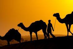 http://arabiannightsafari.com/Camel-Desert-Safari-Dubai.html  The camel desert safari offers an exciting camel ride to travel through the dunes of Dubai desert, exactly how the traditional Arabs used to. #Dubaidesertsafari #Cameldesertsafari