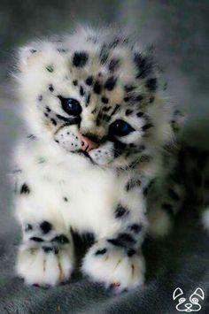 Un ourson léopard des neiges: . - A Snow Leopard Cub.: … A Snow Leopard Cub . Baby Animals Pictures, Cute Animal Pictures, Animals Images, Funny Pictures, Adorable Pictures, Fall Pictures, Animal Pics, Cute Little Animals, Cute Funny Animals