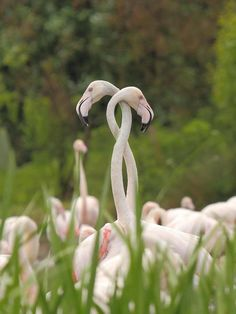flamingos... hmmm I wonder what problem they got their neck`s in a twist over?