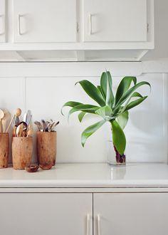 Agave Mitis in a vase