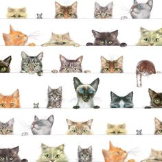 Entertaining with Caspari Gift Wrapping Paper, Kitties, 2-Sheets >>> Huge discounts available now! : Bakeware