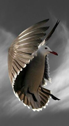 Historically, sailors considered it bad luck to kill a seagull because they believed gulls contained the souls of sailors killed at sea.