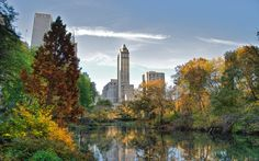 The impressive high rises of the New York city centre protrude from the breathtaking atmosphere of the Central park.