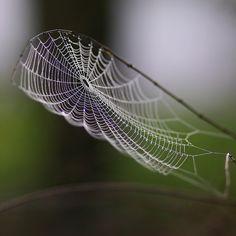 I love spider's webs