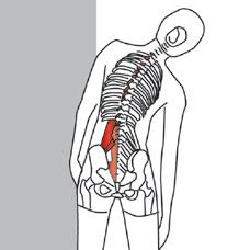 TECHNIQUE  Stand with your feet about shoulder-width apart and look forward. Keep your body upright and slowly bend to the left or right. Reach down your leg with your hand and do not bend forward.   See more at: http://www.triggerpointcentral.com/patient/trunk_and_spine_webv_pt_st_page11.php#sthash.yZ1ypAQf.dpuf