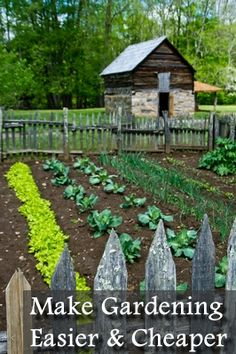 3 Ways to Make Growing Your Own Food Easier and Cheaper