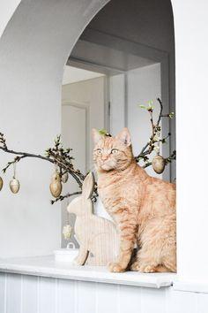 Blog o všetkom, čo ma robí šťastnou. Blog o nás, našom bývaní a chlpatých miláčikoch. Milujem shabby chic štýl Shabby, Country, Cats, Blog, House, Animals, Beauty, Gatos, Animales