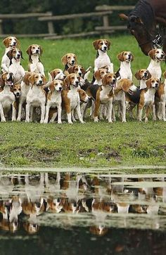 """""""The Hounds Portrait ~ Reflected In The Water."""" This is precious"""