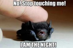 """""""I Am The Night!"""" With the voice I hear this in, just too much XD"""