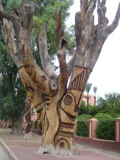 Beautiful tree in Marrakech, Morocco