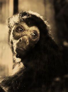 Monkeys ,story tellers by Marta , via Behance
