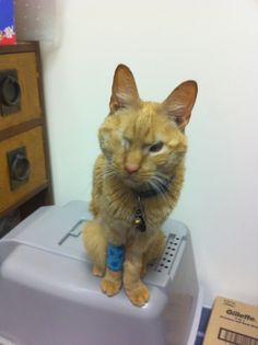 Willie after his illness ready to go back to work at the Cat Clinic