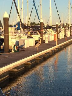 Osprey Point Marina. Rock Hall. Chesapeake Bay. Eastern Shore. Maryland.