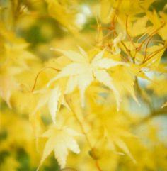 Fall color by Jodi McKee, via Poppytalk.
