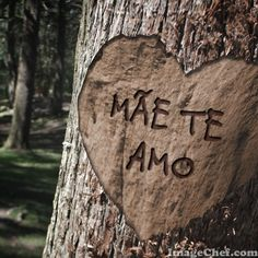 ImageChef - Tree Heart